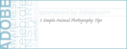 5 Simple Animal Photography Tips from Adobe.com