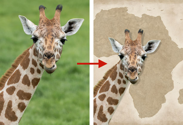 example of the Refine Edge Selection Brush on a giraffe