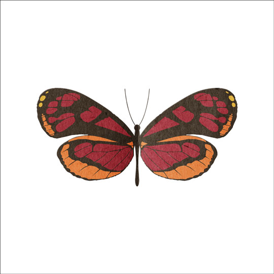 qt-fly-butterfly-img3