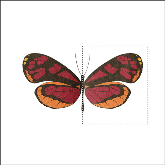 qt-fly-butterfly-img4